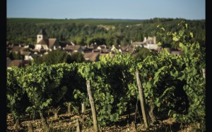 Vineyards in Chablis