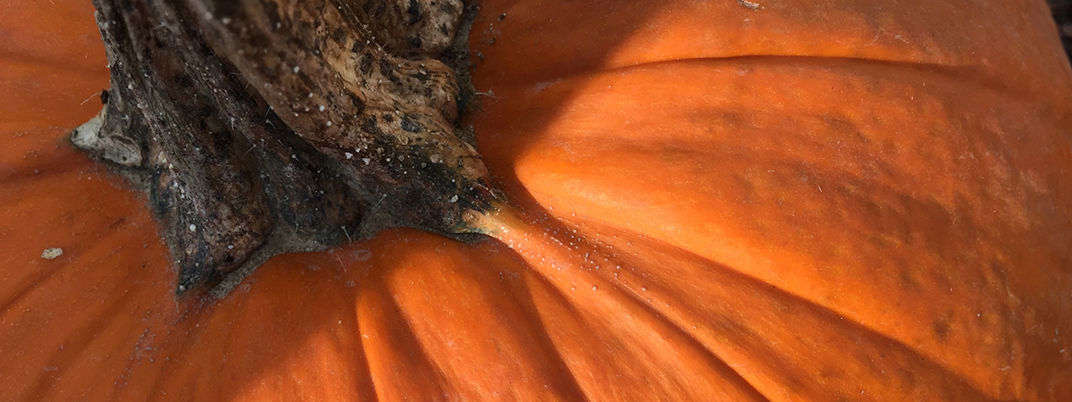 pumpkin_closeup