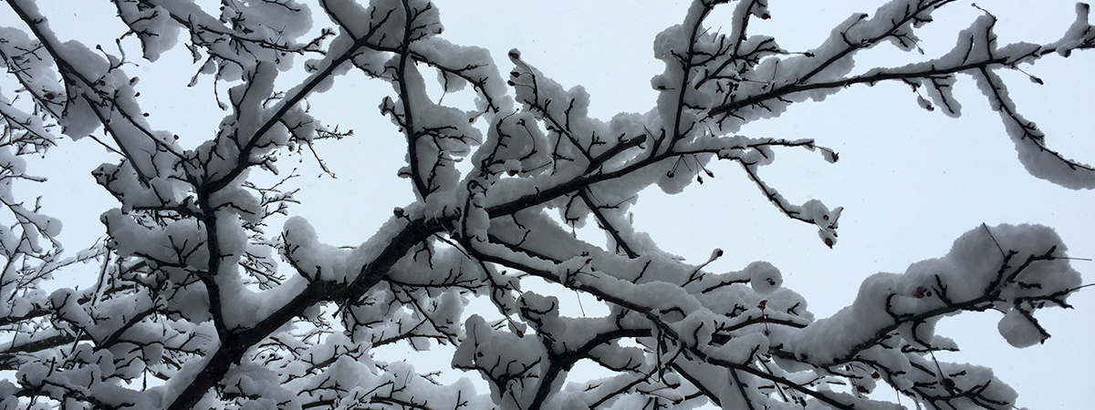 snowybranches_version2