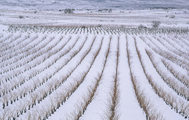 Spanish Wines in Snow