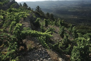 Montsant has a very famous neighbor – Priorat
