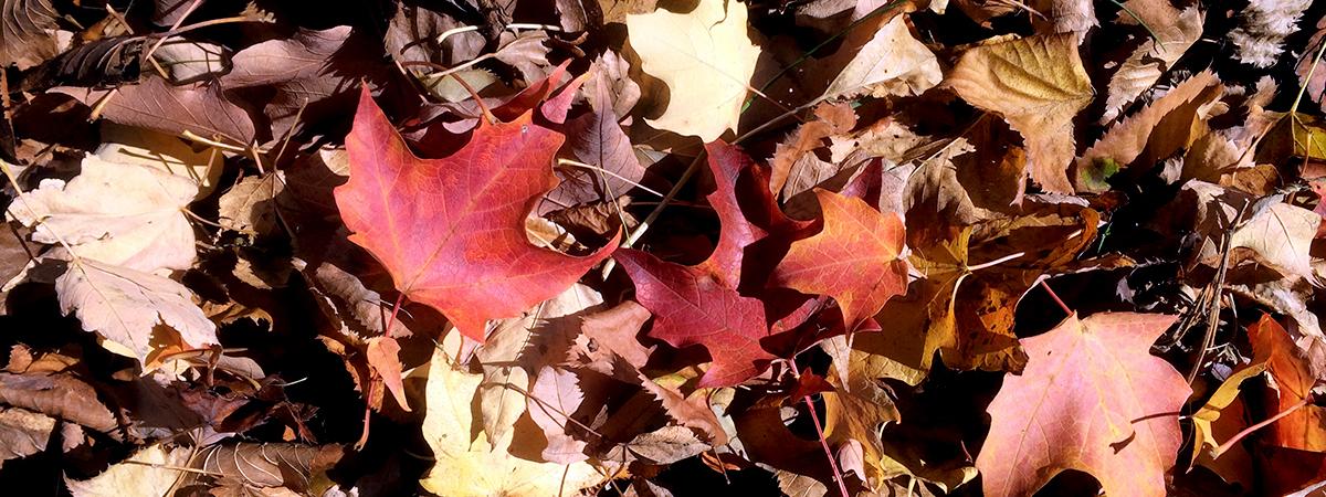leaves2016_version2
