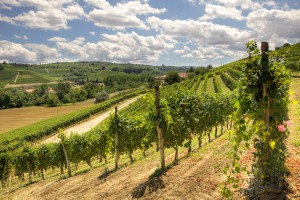 A View From a Northern Italian Vineyard