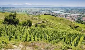 Beautiful Vineyards in the Rhone
