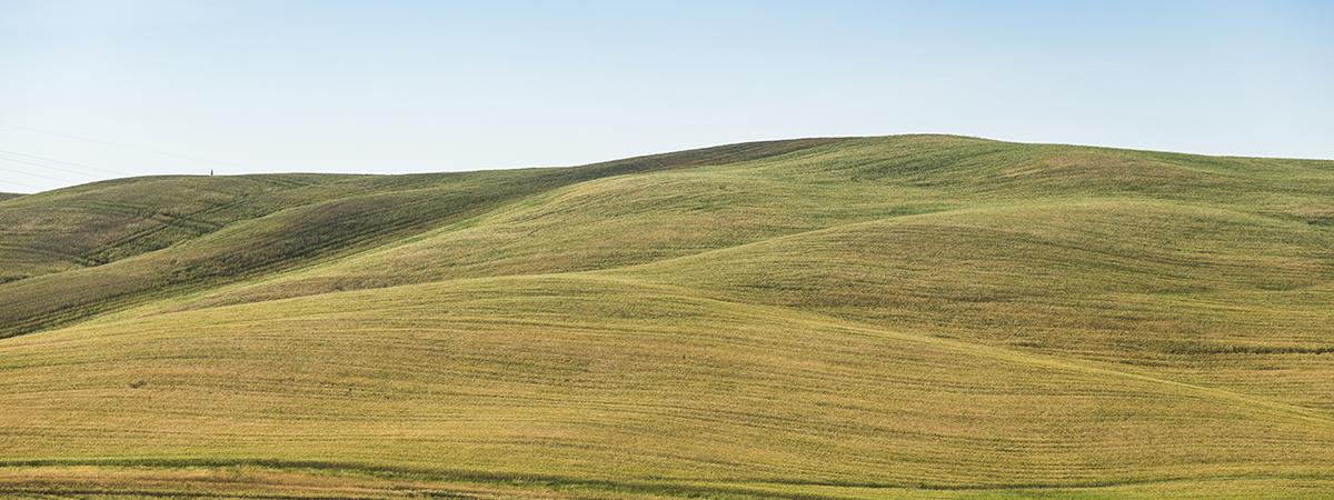 grassy-knoll-version2